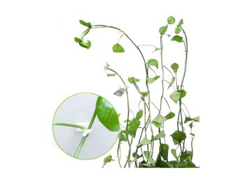 10db Mászó növény rögzítő öntapadós csat